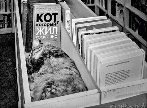 Кот, который жил роскошно