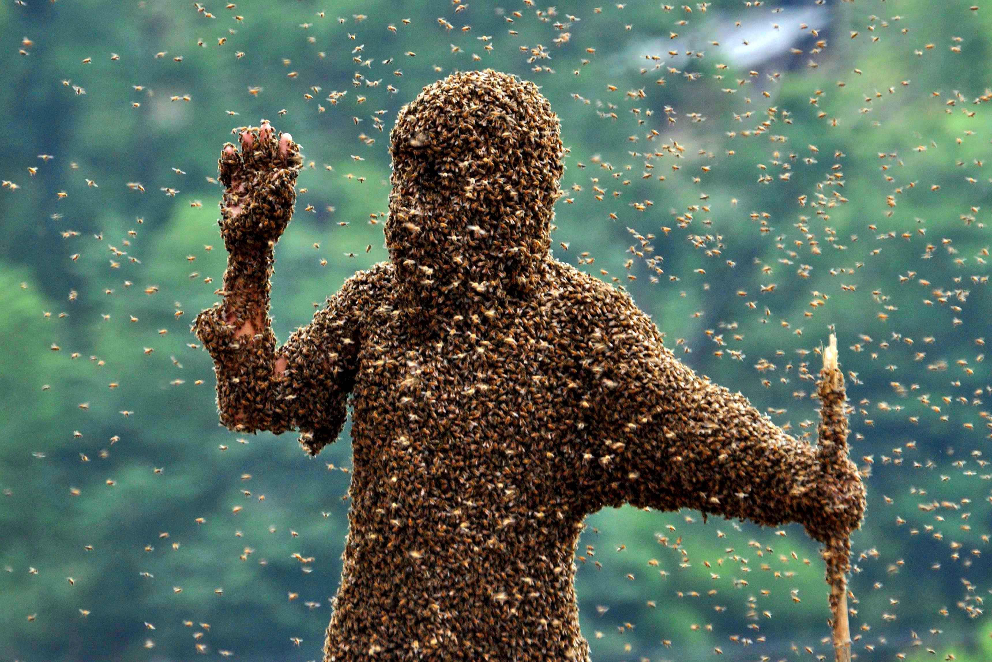 Почему нельзя трогать руками пчелу